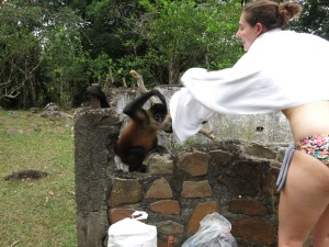 Thieving monkey at the Hot Springs attempting to steal this girl's towel
