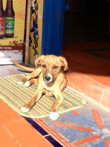 Goofy the stray dog of Finca Escondida