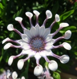 I wish I knew the name of this odd flower